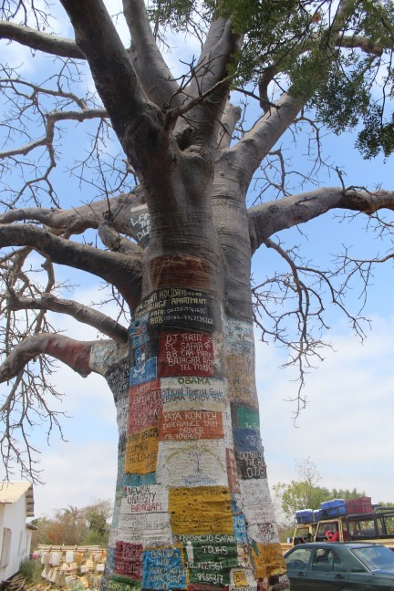 Internet tree at Lamin Lodge