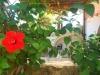 Pap's garden